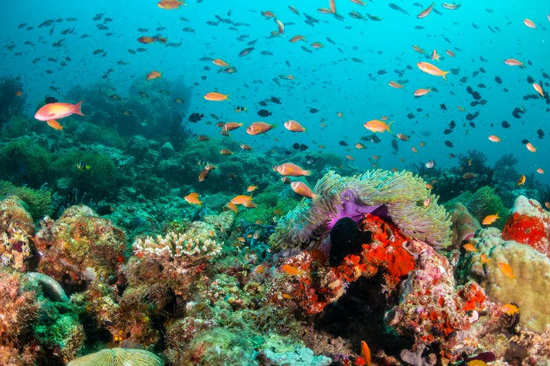 Superyacht charters The Great Barrier Reef